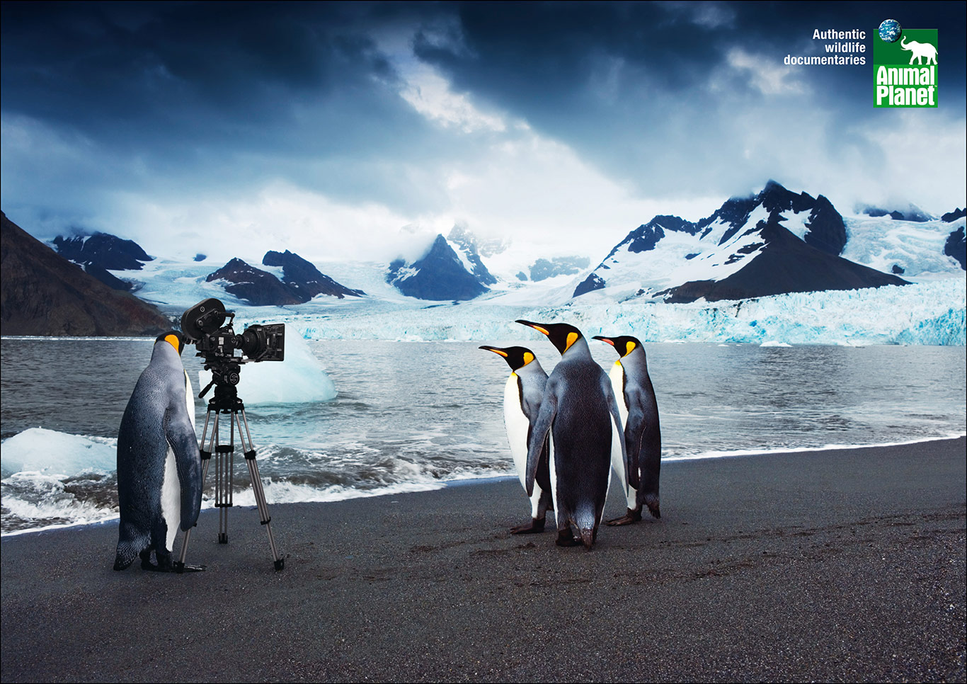 1-Animal-Planet-Cameramanimals-Penguin