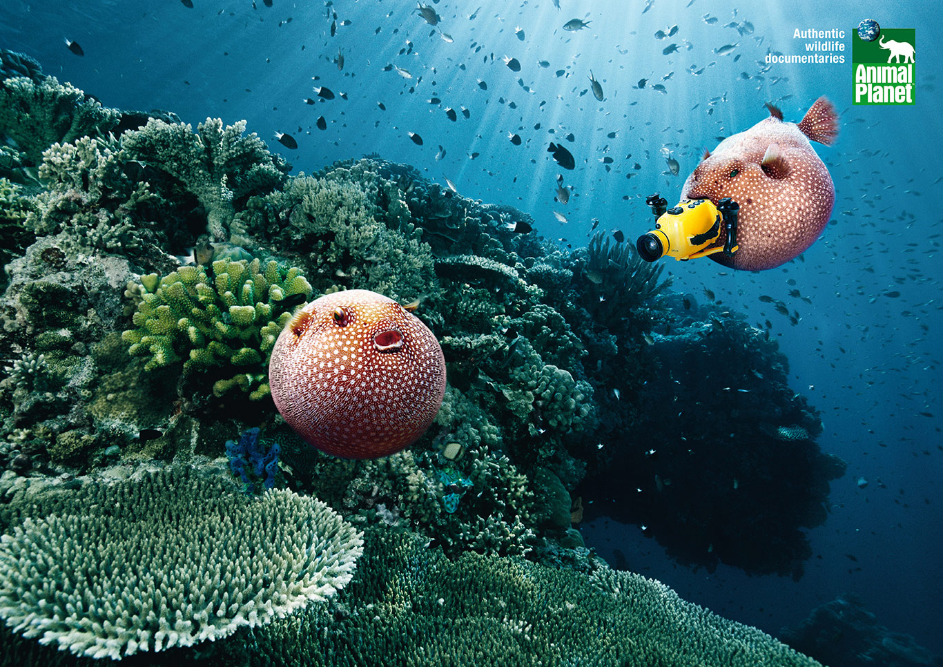 3-Animal-Planet-Cameramanimals-Blowfish