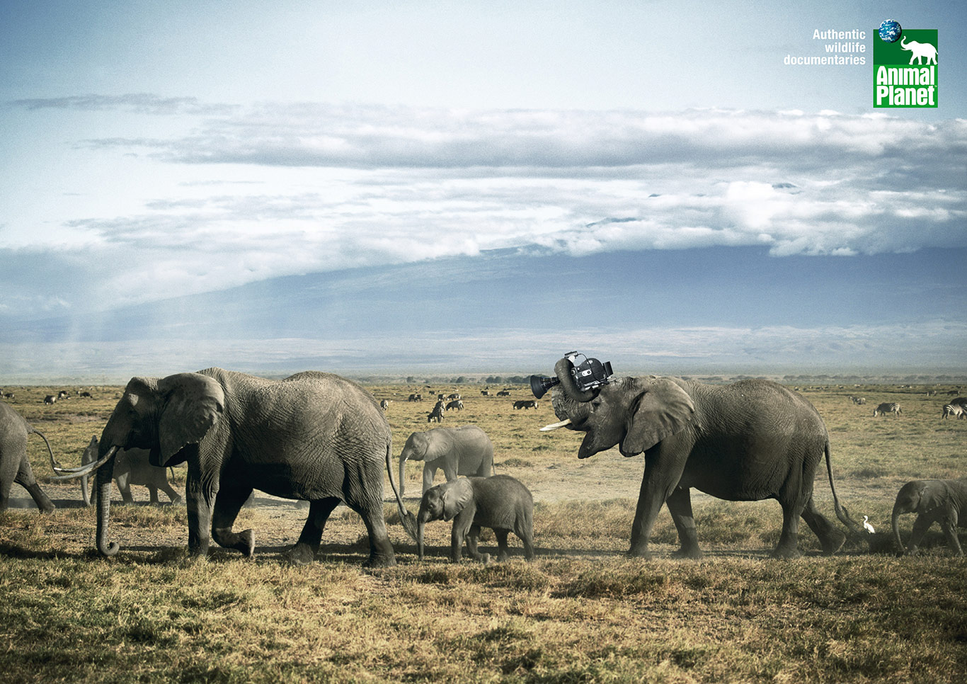 4-Animal-Planet-Cameramanimals-Elephant